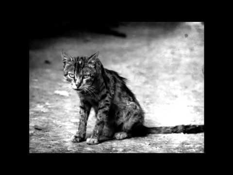 Грустная песня про кота!