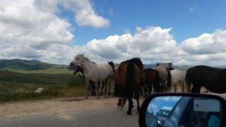 Konji na cesti | Horses on the road