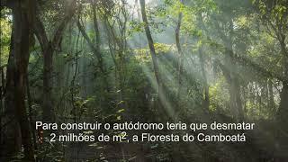 As crianças e a Floresta do Camboatá.