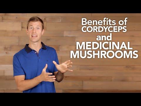 Benefits of Cordyceps and Medicinal Mushrooms