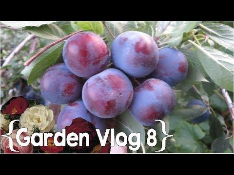 Planting and Harvesting ║ Garden Vlog Ep. 8 │ Large Family Vlog