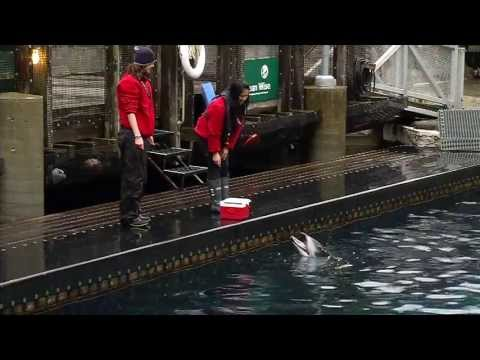 Hire Learning - Vancouver Aquarium Trainer