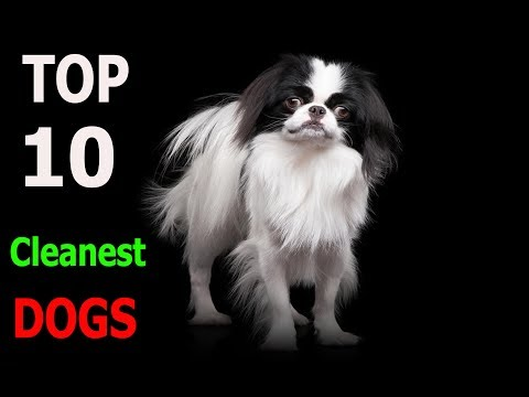 Top 10 Cleanest dog breeds | Top 10 animals