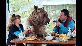 Как приручить медведя? Самый большой домашний медведь.