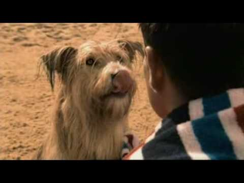 Beneful Prepared Meals Dog Food Tv Commerical Youtube