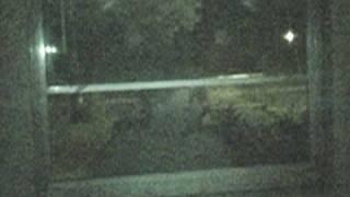 Real alien, stan romanek cleaned up video thumbnail