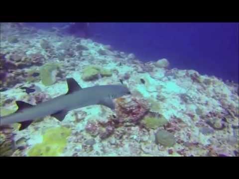 Maldives diving safari 2014