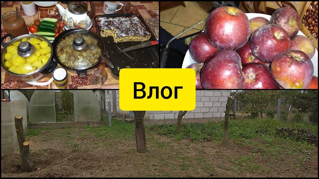 Влог: Деревья спилили Чёрные Орехи А я всё собираю и Готовлю