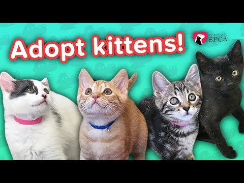 Adopt Stailey, George, Bren, & Cho! // Adoption Featurette