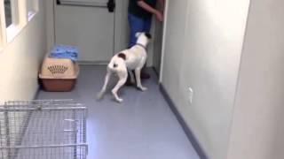 Legacy Boxer Rescue Bin 15212