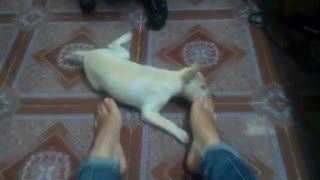 My little dog, her name is Kem :x