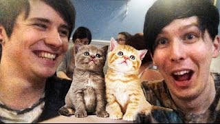 One of LessAmazingPhil's most viewed videos: CAT CAFÉ!!