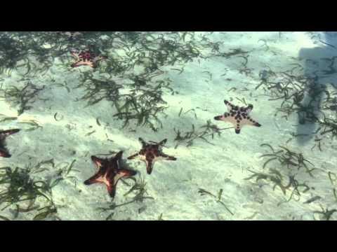 Invasione di Stelle Marine a Vanuatu HD (Erakor island)