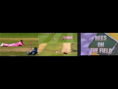South Africa vs Sri Lanka 3RD ODI 2017 Bees Attack in Johannesburg Stadium NEWS