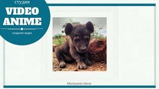 28 новорожденных животных, которых вы никогда не видели