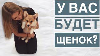 Подготовка к появлению щенка у вас дома