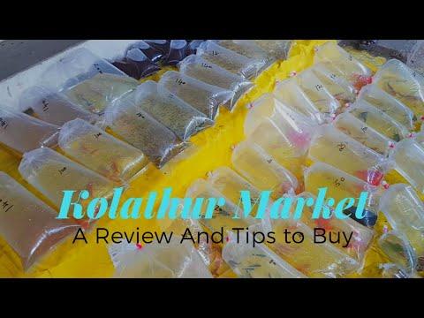 How To Buy Fish & Aquarium Tank In Shops?