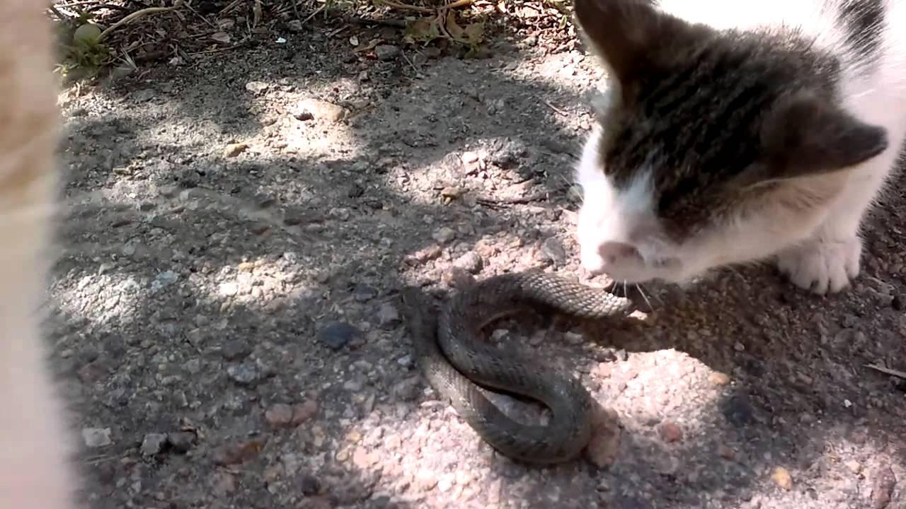 Могут ли коты ловить змей