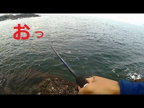 アジングしてたら色んな魚が釣れる!!高級魚も。