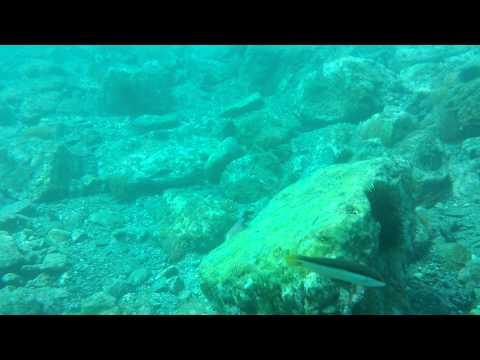 Diving the reef at Marina del Este, Nerja