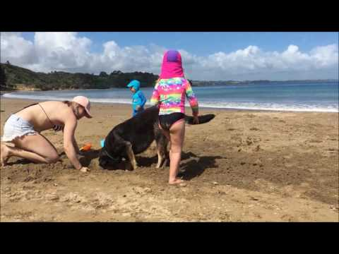 Hihi Beach Holiday in Northland New Zealand