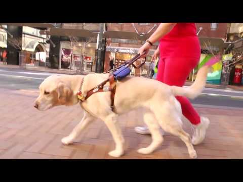 A Friend in Sight (Guide Dog Story)