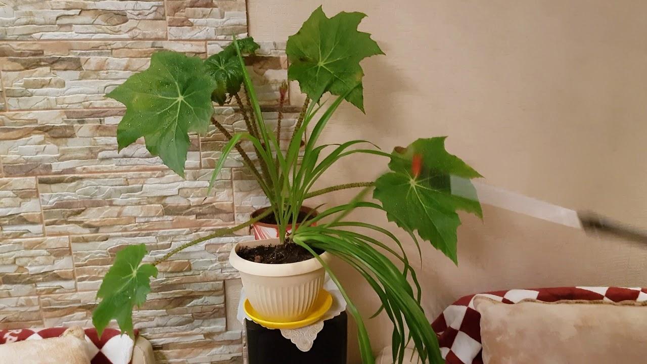 Как пересаживать комнатные растения. Как ПРАВИЛЬНО пересадить .
