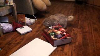 Подарок коту на новый год