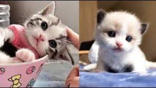 قطط صغيرة كيوت اوى - قطط مضحكة