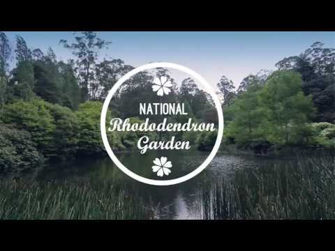 Photography tour in the Dandenong Ranges, Victoria