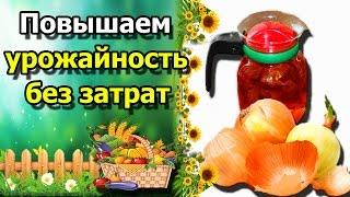 ☘ЛУКОВАЯ ШЕЛУХА как удобрение на огороде. Дедовские методы против болезней растений.