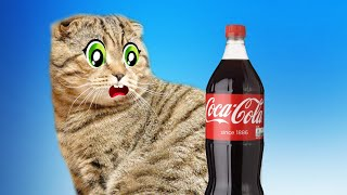 Cat's challenges -My cat really hates Oranges Coca Cola and Aspirin