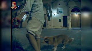 Bologna, porta a spasso il cane e danneggia due auto: scoperto e denunciato