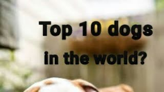 Top 10 dogs,  breeds sep/2018