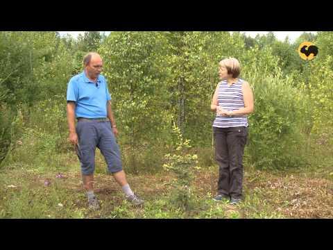 Питомник хвойных растений. Ландшафтные хитрости 84