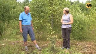 Питомник хвойных растений. Ландшафтные хитрости 84(, 2013-09-24T20:55:38.000Z)