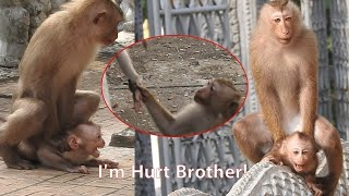 The Baby Monkey so Hurt From Another Monkeys, His Cry so Loud & Why Another Monkeys Make Baby Hurt?