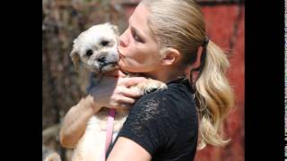 Apr 6 2014 Faith The Shih Tzu Maltese Music Video Husky House