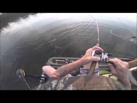 Bass Fishing 8 15 15 Lady Bird Lake Austin Tx Frog Fishing