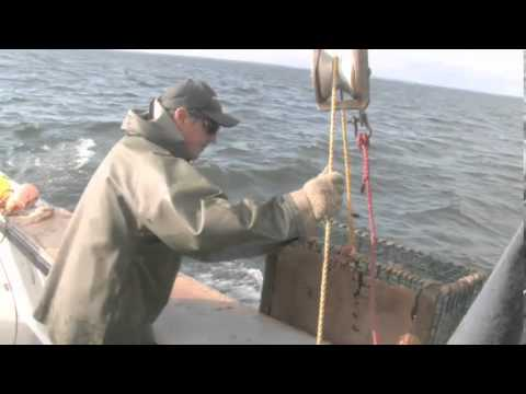 Westmorland Fisheries Cap Pelé NB   Fresh Lobster Meat, Tail, Claws And More