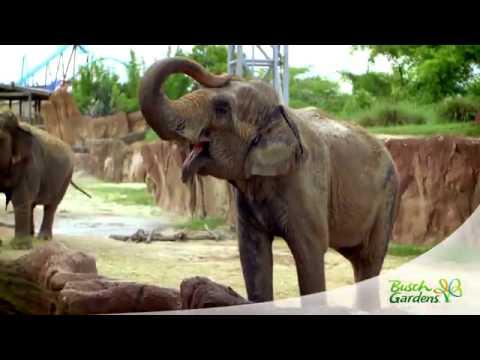 2015 Busch Gardens Tampa Bay Overview