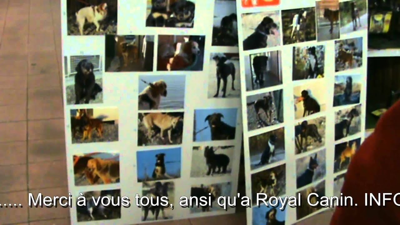 Journee D Adoption Spa Sud Alpine Gap Montage Et Video Dj Kriss