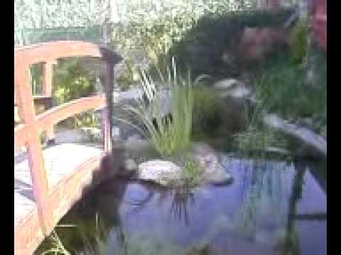 Estanque de jardin con truchas youtube for Estanque de truchas