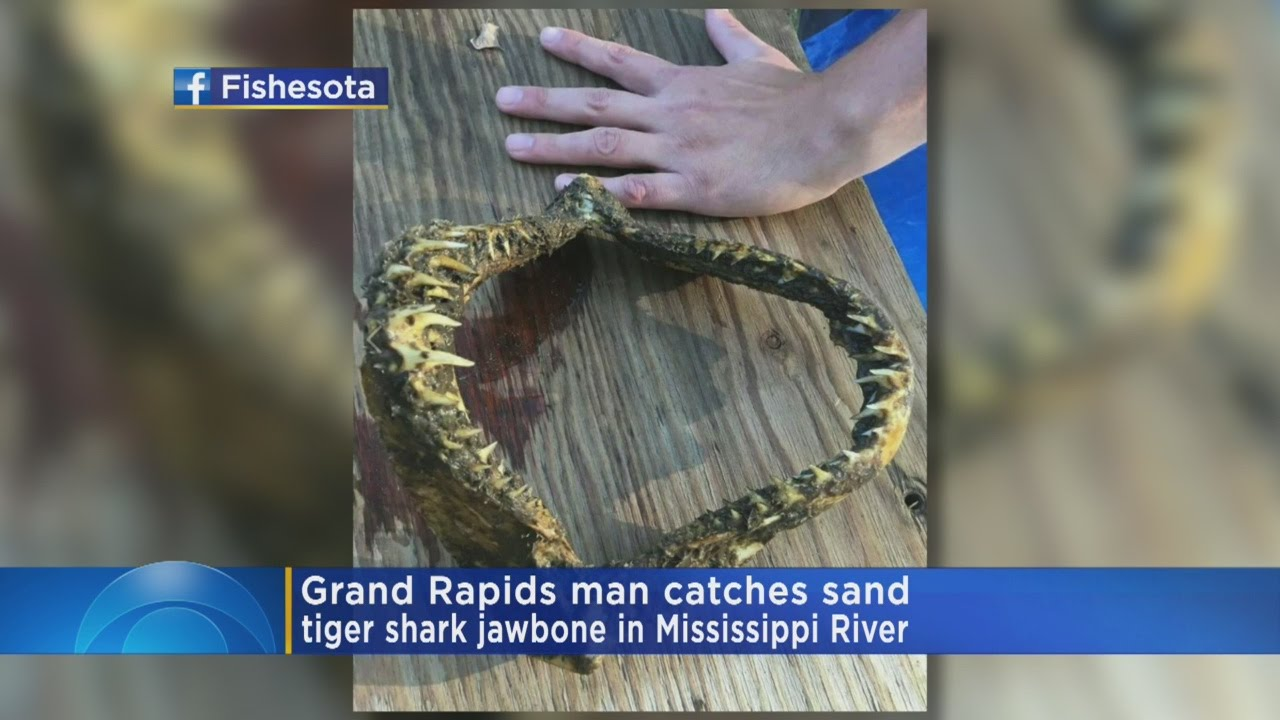 Angler Pulls Shark Jawbone From Mississippi River