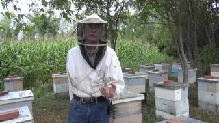 Michael Palmer - On Package Bees