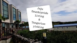 Gambar cover South Korea, Jeju Island Travel Guide - Jeju Countryside Airbnb Stay & Tangerine Picking Ep5