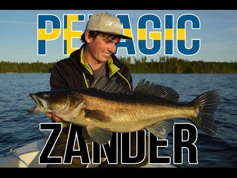 Pelagic zander Sharpshooting with Gunki