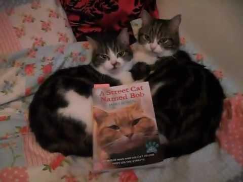 James bowen a street cat named bob. cats love book