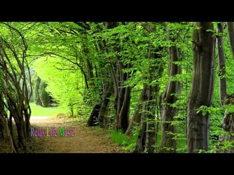 Meditation Music For Positive Energy Sleep, Meditation (Musical Genre) #3