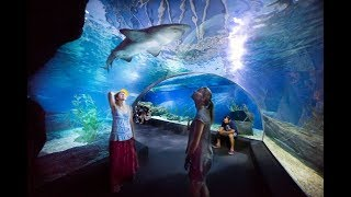 Sea Life Bangkok || Best Tourist Attraction of Thailand | Under Water World